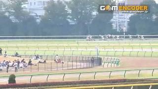 東京競馬場にて。 競争馬の生い立ちを、おがわじゅりさんのイラストを使...