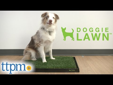 real-grass-dog-potty-pad-from-doggielawn