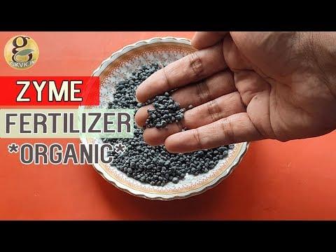 ZYME FERTILIZER For Plants | Alternative to NPK DAP - Bio Fertilzier | How to USE Zyme Granules