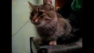 Приколы с котами (Смешное видио)