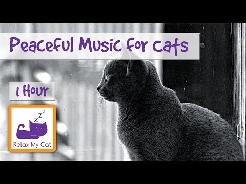 Peaceful, Relaxation Music for Cats of Any Age or Breed! Relaxing Cat Music