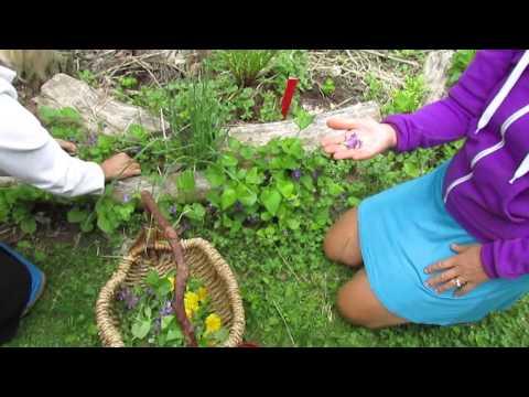 Transformation Essence- wild and organic greens with Pavla