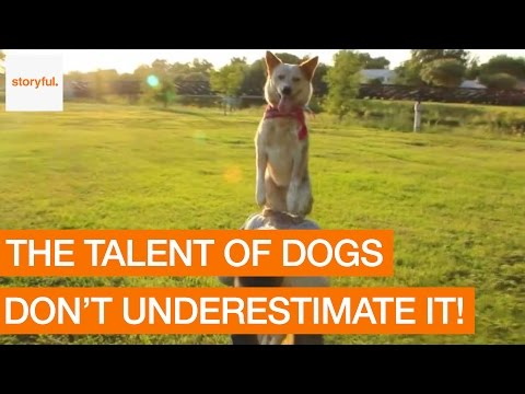 Clever Dog Shows Off Incredible Tricks (Storyful, Dogs)
