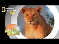 Wild Discovery Animals - Craziest Animal Fights Caught On Camera! Animals Documentary 2018