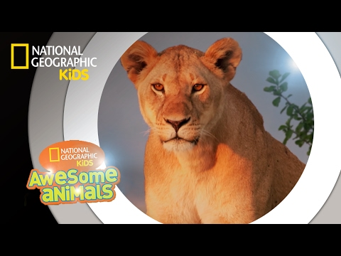 super-pride-|-awesome-animals