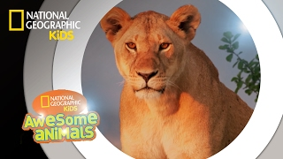 Super Pride | Awesome Animals
