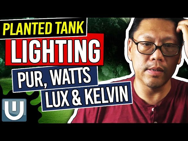 PUR, Watts, LUX and Kelvin - Planted Aquarium Lighting Guide – Part 7