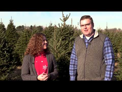 Growing Christmas Trees in the Midwest! - Friday Five (12/6/19)