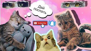 Смешной кот 2019 Барсик Смешные видео с котами Приколы с животными