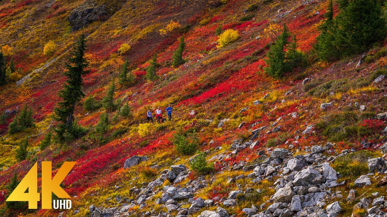 11 HRS Incredible Fall Foliage - Best 4K Autumn Nature Scenes from Around the World + Calming Music