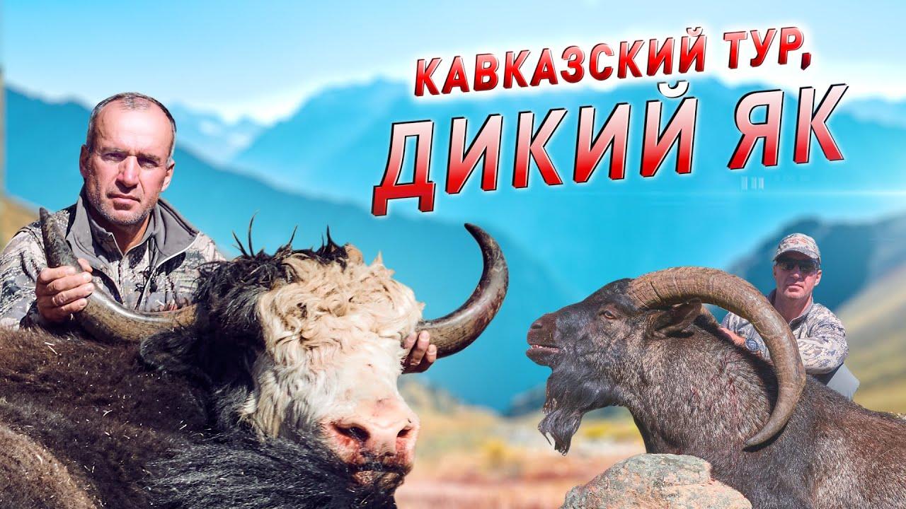 ТРОФЕЙНАЯ ОХОТА В КАРАЧАЕВО-ЧЕРКЕСИИ. КАВКАЗСКИЙ ТУР, ДИКИЙ ЯК (2021)