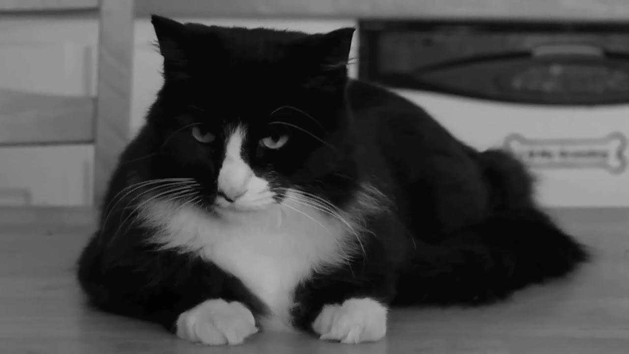Henri le Chat Noir bids us