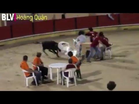 Trò chơi mạo hiểm ngồi im cho bò húc