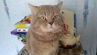 Кот ЛЮБИТ своих котят. Самое милое видео!