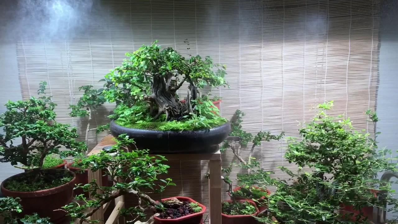 My Mini Garden Bonsai. Misting Systems.