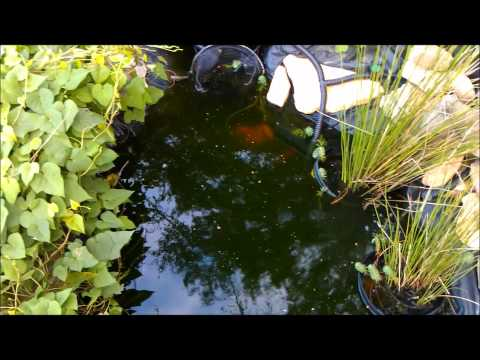 Easy 35 Diy Koi Pond Skimmer Doovi