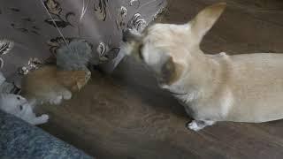 Котята подросли//Подкармливаем котят//Котята ищут хозяина//Отдам красивых котят