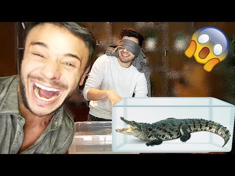 CE ESTE IN ACVARIU !! 😱(WHAT'S IN THE AQUARIUM) cu Dima Trofim