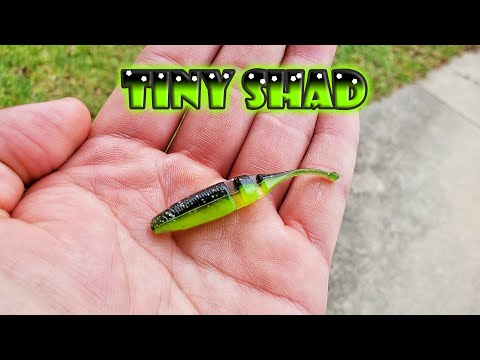 Fall BFS Fishing With Tiny Shad - Lake Fork Trophy Live Baby Shad