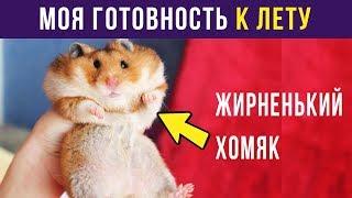 Приколы. К ЛЕТУ ГОТОВ  Мемозг 84