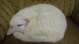 Разбудили котенка)