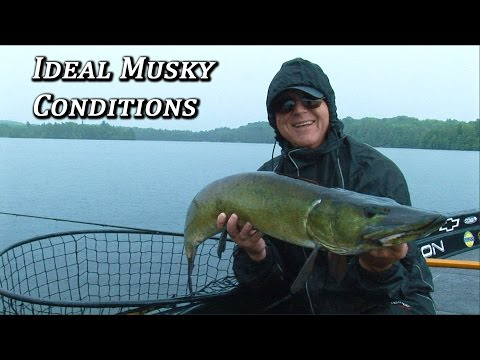 Ideal Musky Conditions