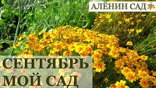 СЕНТЯБРЬ 2018 МОЙ САД и ОГОРОД / Garden