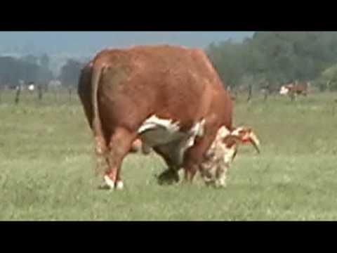 Breeding Season At The Ranch!