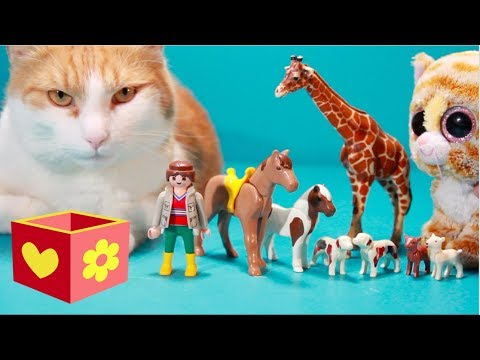 Cute cat   Simba plays with Toys   Video for children to watch  9 