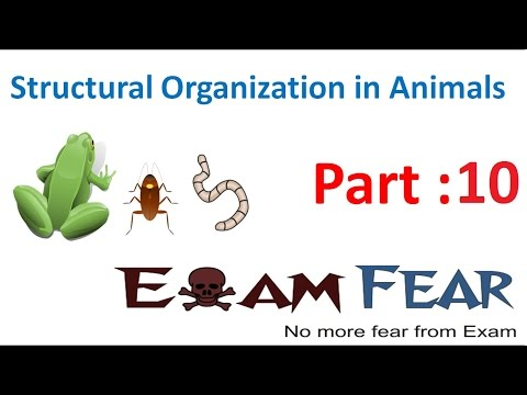 Biology Structural Organization Animals part 10 (Connective tissue type: Blood) CBSE class 11 XI