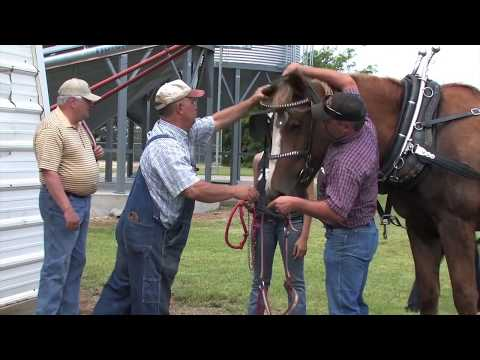 Draft Horse Driving Clinic At Heavy Horse Equipment And RX Acres Belgians