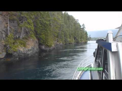 Vancouver Island whale watching at Telegraph Cove.wmv