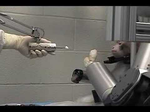 Monkeys brain controls robotic arm  YouTube