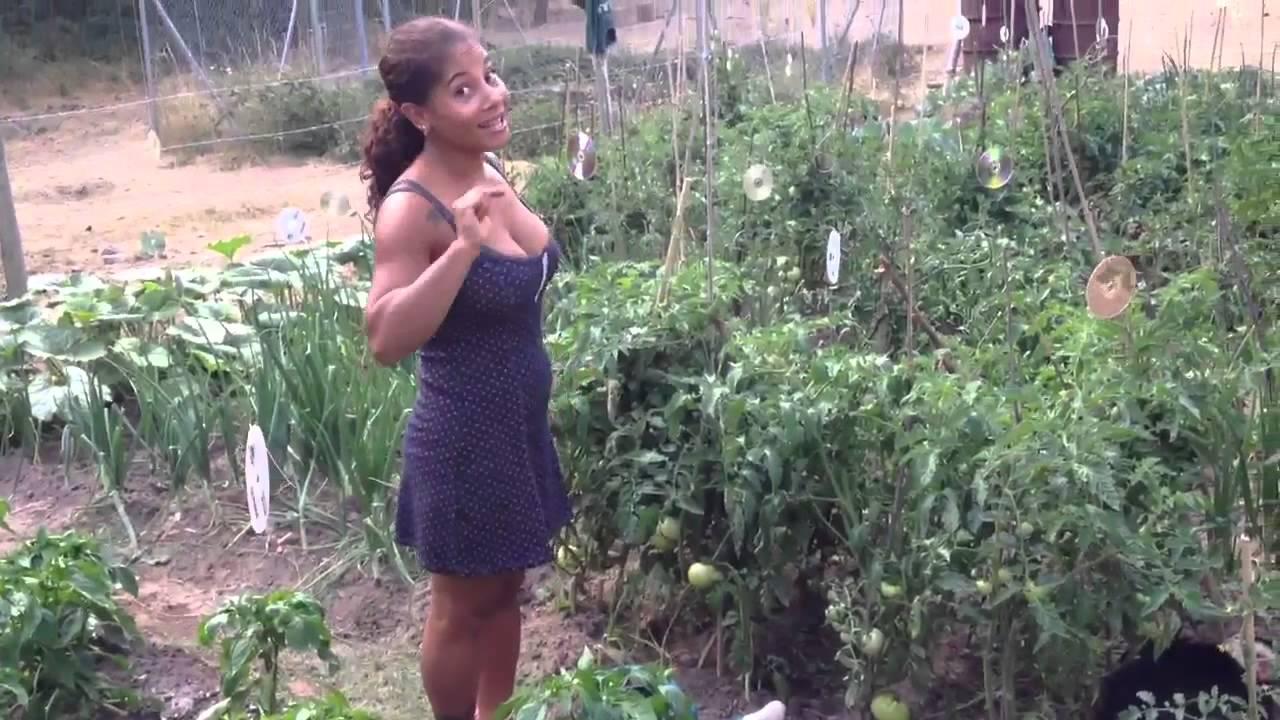 Como cultivar el huerto Regar Recetas de Comida 10 La Cocina de