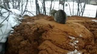 Копаем Колодец В Жуково Уфимского района(, 2016-03-20T07:50:36.000Z)