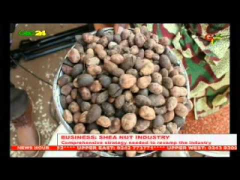 Ghana: Shea Nut Industry