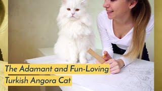 The Adamant and Fun Loving Turkish Angora Cat