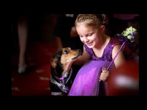 Dog Friendly Wedding Venue Derbyshire