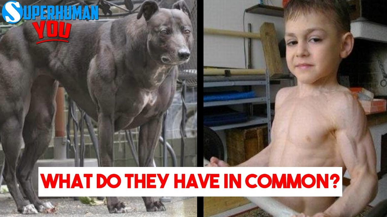 Why Is This DOG and KID So MUSCULAR ?