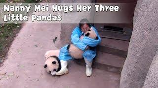 今日もここは子パンダ天国。相変わらずパンダまみれの飼育員メイさん