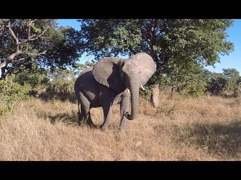 Beautiful Botswana and the Nature filled Namibia