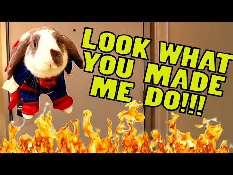 Look What you Made the Bunny do