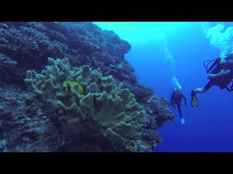 Back wall Molokini Maui with the Go pro Hero 3 Balck edition,Whales,Sahrks and more.