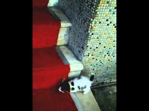 merdiven çıkmaya çalışan fırlama kedi