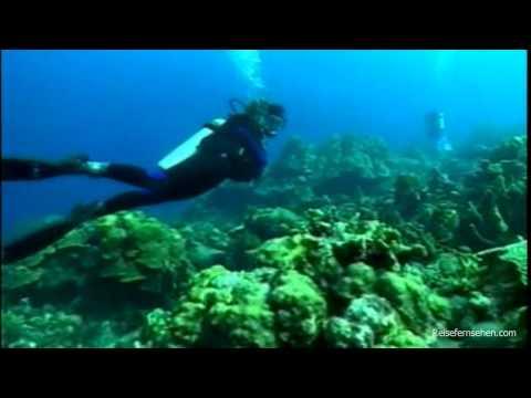 Curacao: Tauchen / Diving - Reisevideo / travel video by Reisefernsehen.com