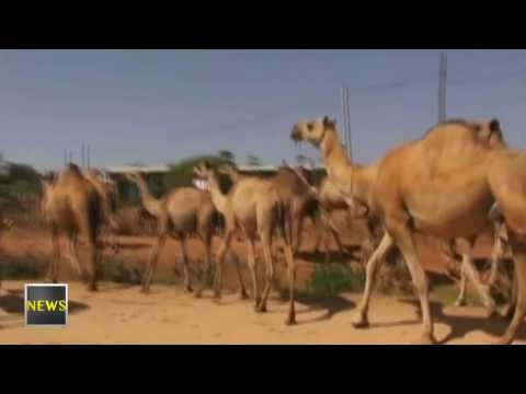 Ethiopia: Latest News Highlights from ENN Television, April 28, 2017