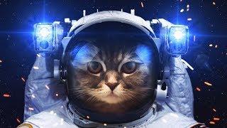 Eдинственный запуск кошки в космос