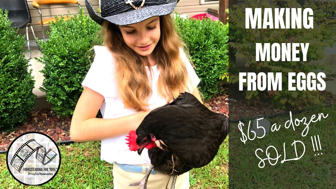 Download A box of eggs for $65 | Ep 3. Homestead Documentary | Provision and profit with backyard hens.
