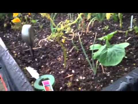 Organic Gardening vs Miracle Grow