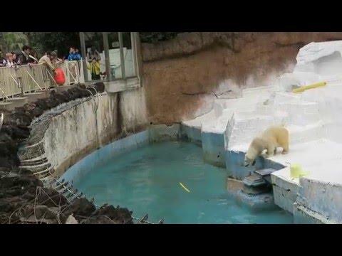 #2-22 March 2016 Shilka at Tennoji zoo, Osaka, Japan